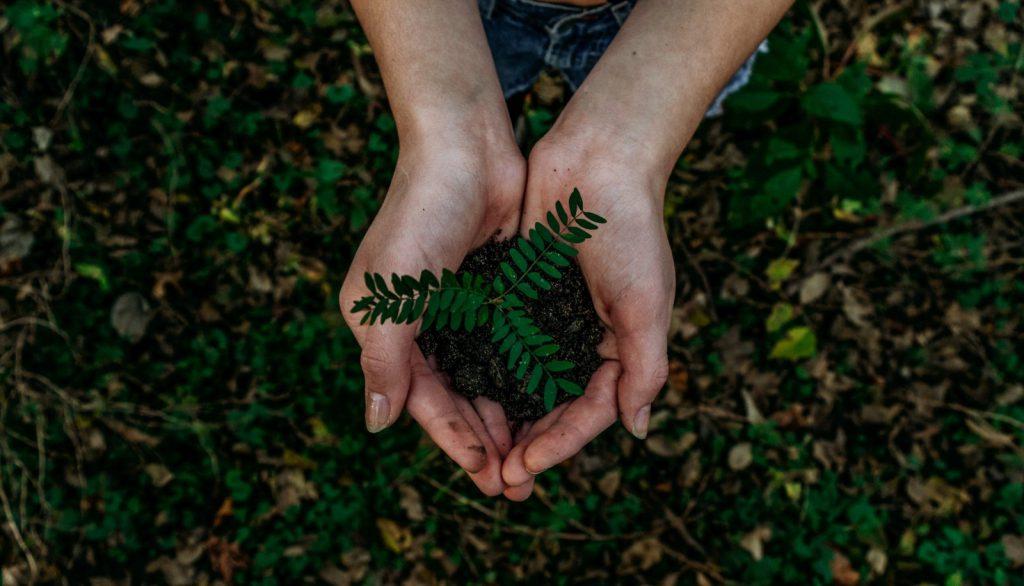 kremacja a ekologia